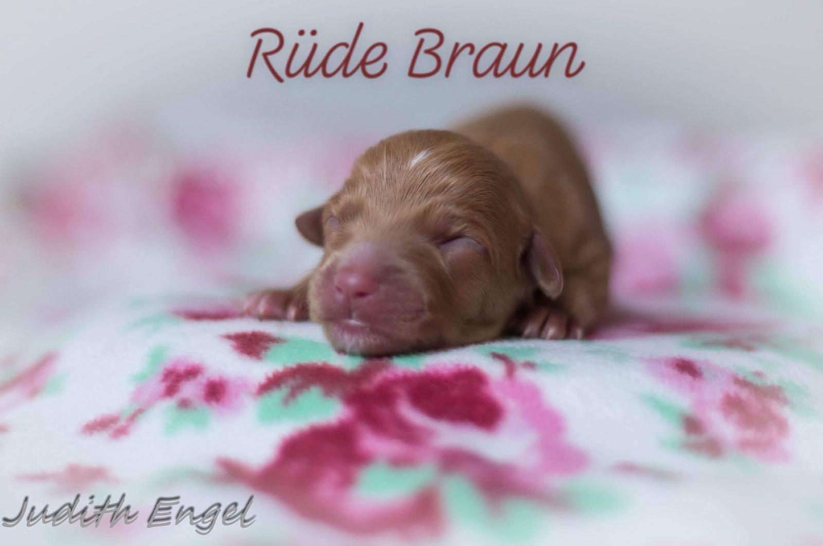 braun-1