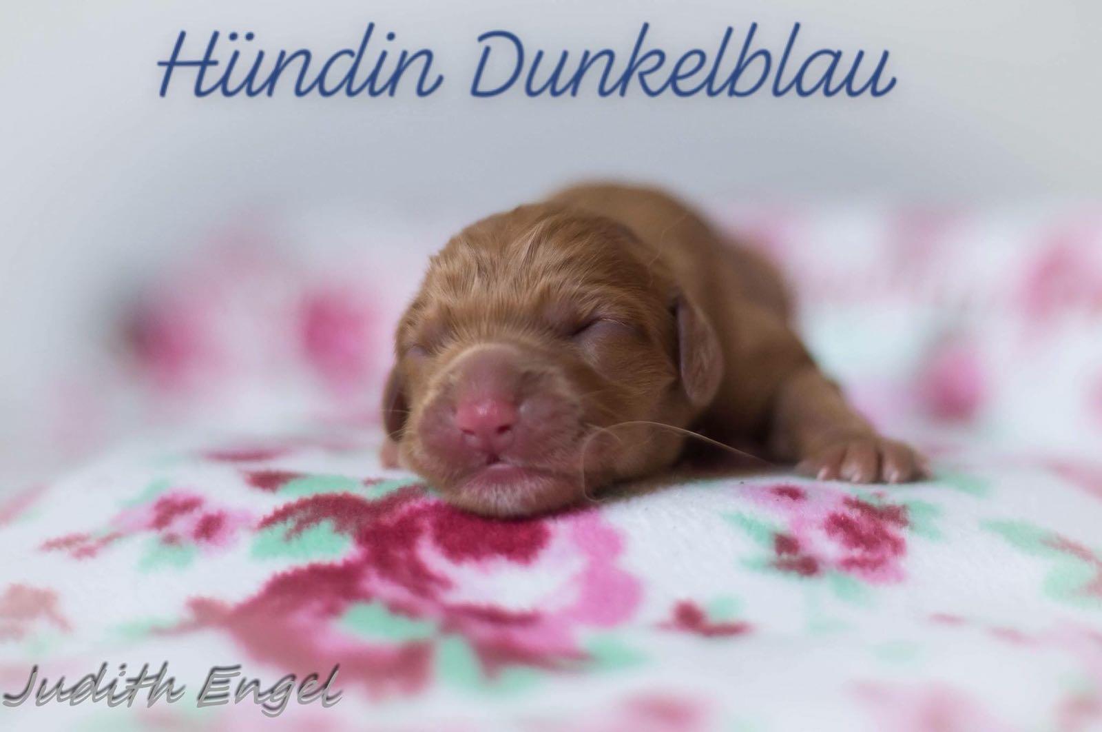 dunkelblau-1