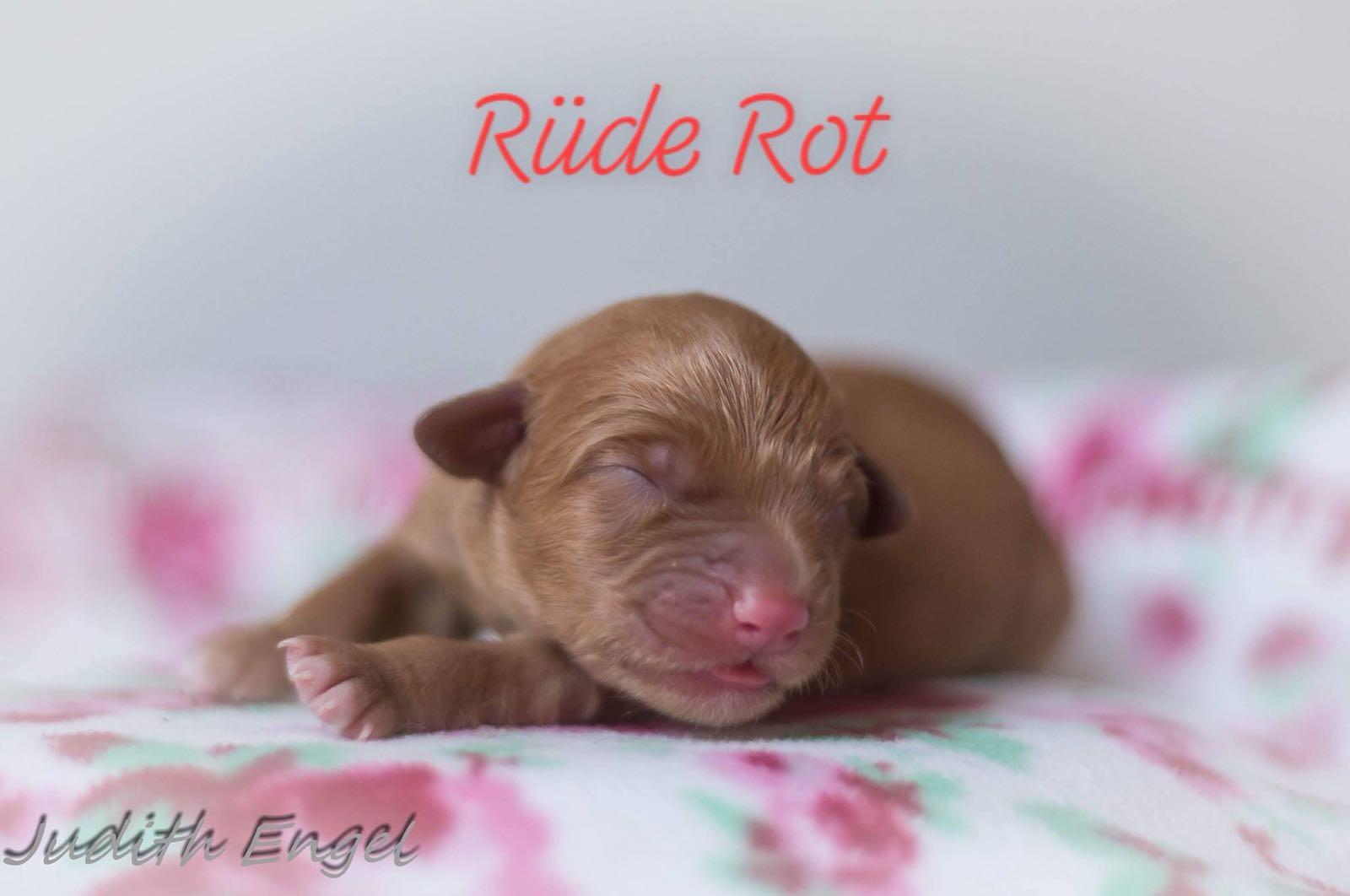 rot-1